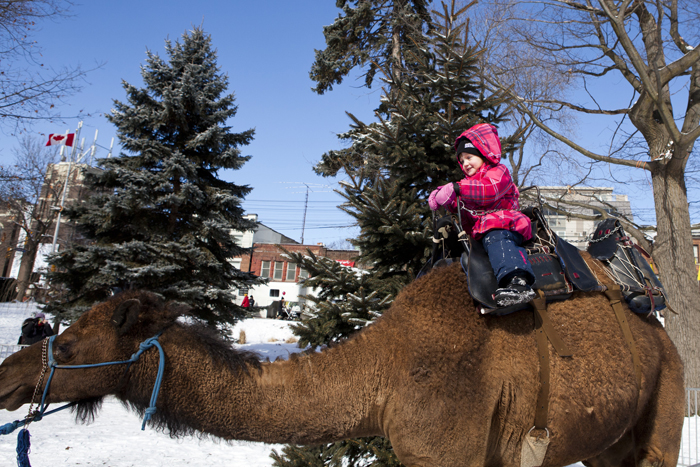 The always-popular Bowmanville Zoo animals will be back in Kew Gardens for Family Day, held this year on Sunday, Feb. 17. Beach Metro News File Photo: Phil Lameira