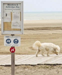 A dog walks off-leash along the boardwalk at Woodbine Beach Park. PHOTO: Andrew Hudson