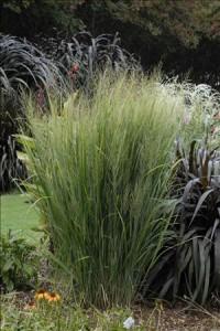 garden-northwind peren 2014web