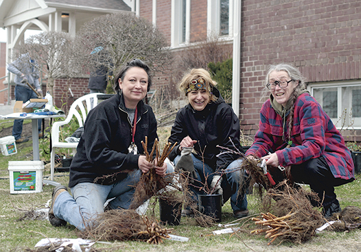 From left, Virginie Gysel, Dawn Lyons, and Sylvia Kraus sort fruit-bearing shrubs and trees at Treemobile Toronto's first-ever planting day at St. Saviour's Anglican Church on April 26. The volunteer group delivers low-cost, food-bearing plants to residents in an effort to grow organic food with a lower carboon footprint. For more information, visit transitiontreemobile.org. PHOTO: Andrew Hudson