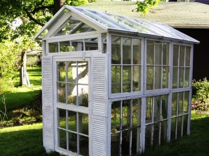 Greenhouses built from old windows can be built large enough to walk into.