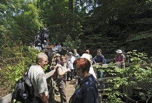 The short boardwalk running through the northernmost Small's Creek ravine could barely hold about 50 people who walked the creek's course on July 20. PHOTO: Jon Muldoon