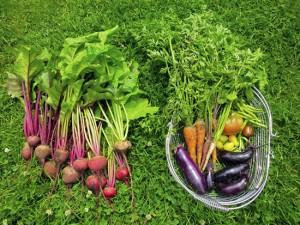 ehst-harvest