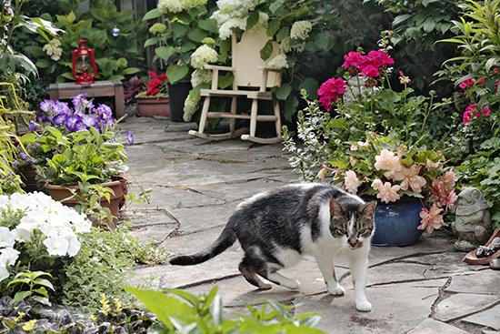 Small Garden Is Big On Personality Beach Metro Community News