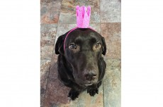 Gracie Lou with Party Hat