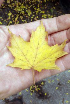 leafcatch01-1