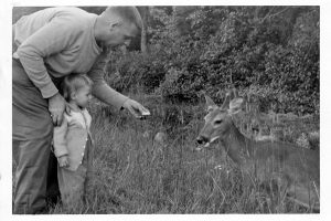 The author and her father encounter a deer.