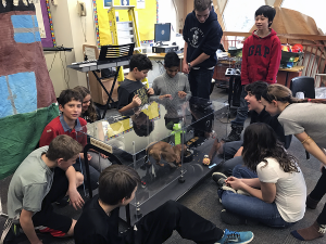Glen Ames students test the PetPortion prototype ahead of competition.